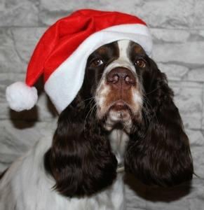 Holiday Music for Christmas