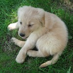 Puppy Training Tips for Bringing Home New Puppies