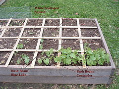 Square Foot Gardening – 5 Tips for Growing Plants in Small Spaces