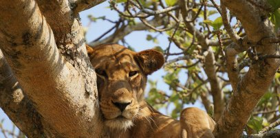 Travel Tips for Africa