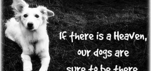 guilty feelings killed my dog