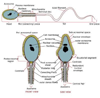 sperm test results