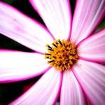 Cant Afford Fertility Treatments flickr higetiger